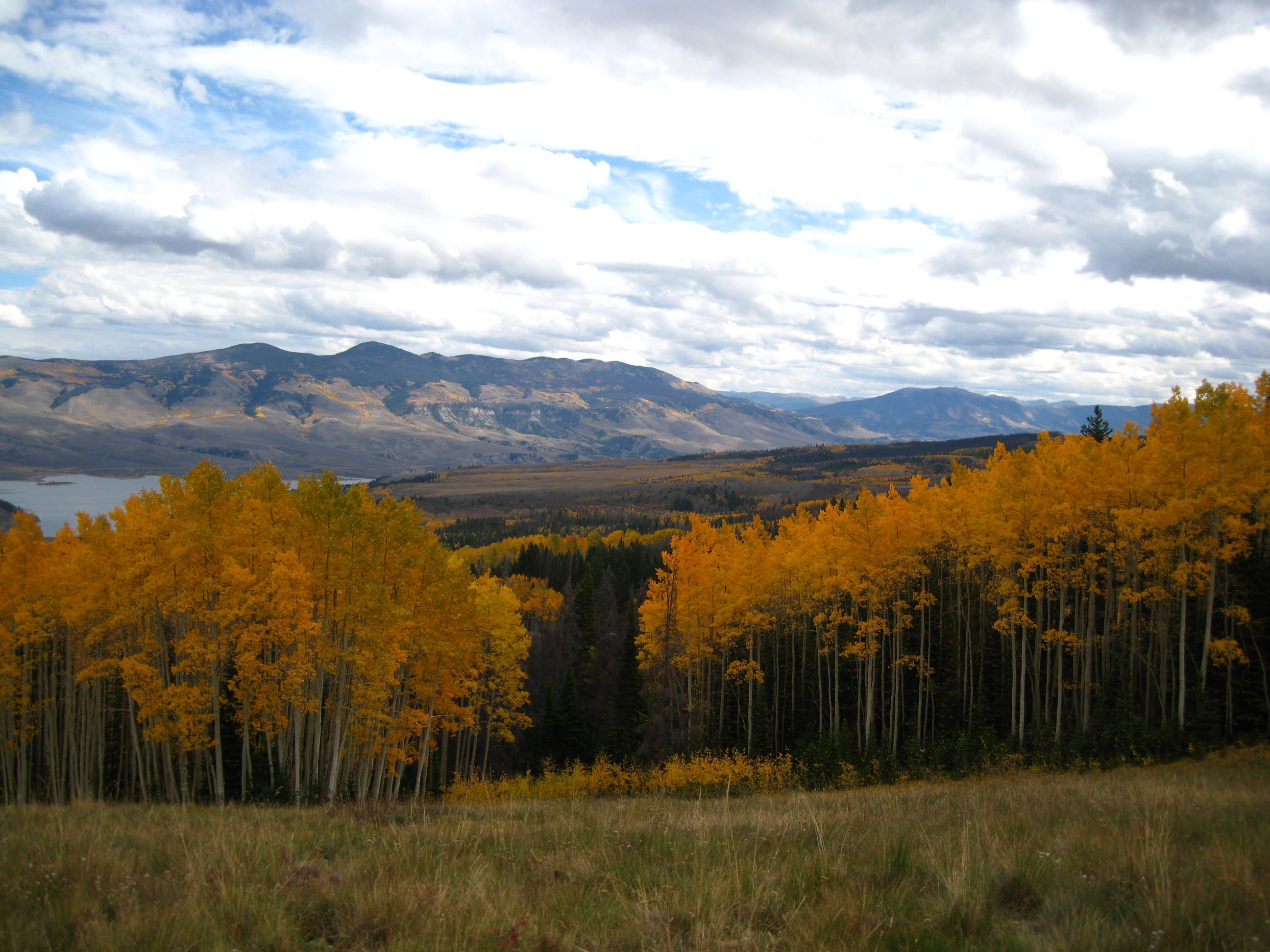 Picture of aspen trees in fall